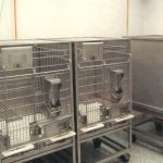 Cages-for-ABSL3 Lab